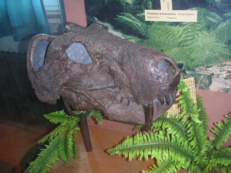 Dinogorgon-Schädel