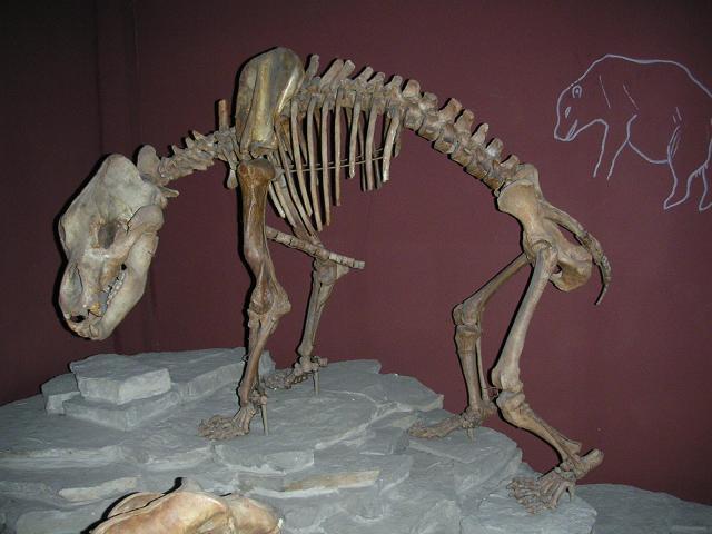 Höhlenbären-Skelett
