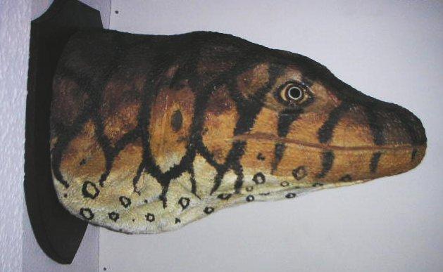 Megalania-Kopf