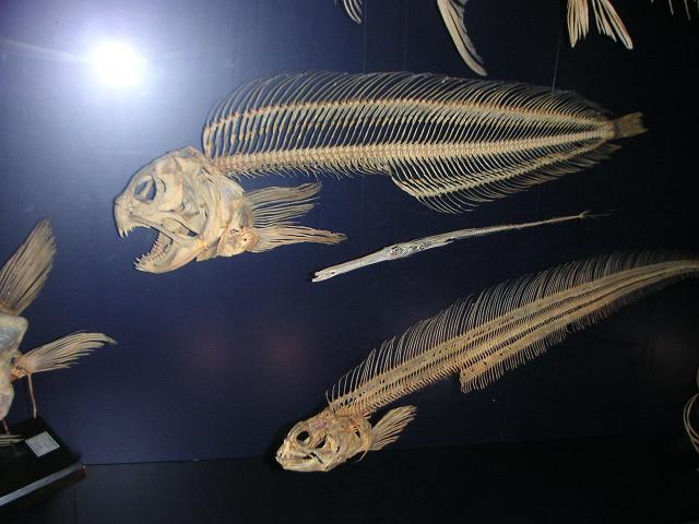 Seewolf-Skelette