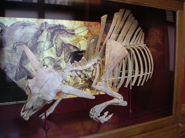 Wisen-Skelett
