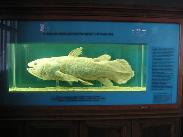 Quastenflosser in Formalin (Naturhistorisches Museum Wien)