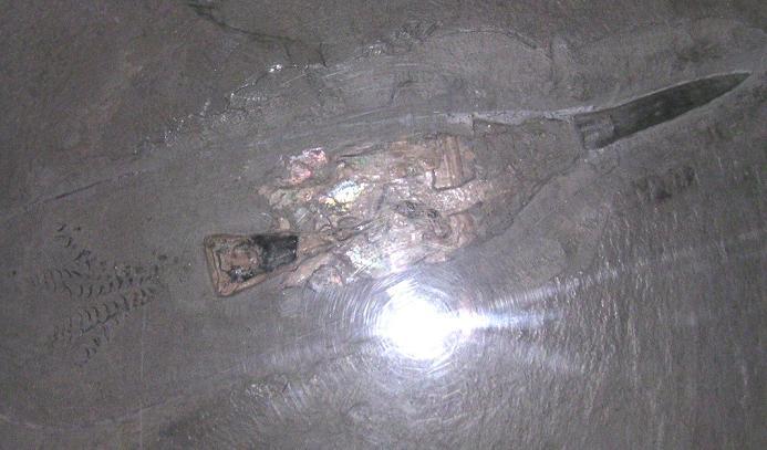 Belemniten-Fossil