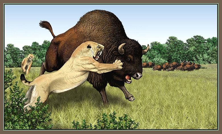 Smilodon vs Bison antiquus