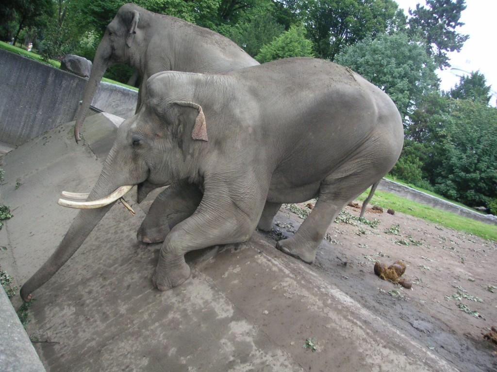 huge-asian-elephant-bull-1