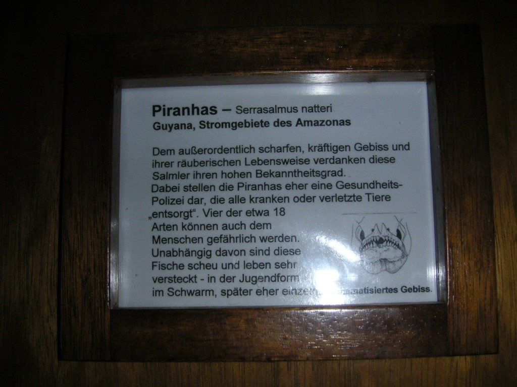 Piranha Gebiss