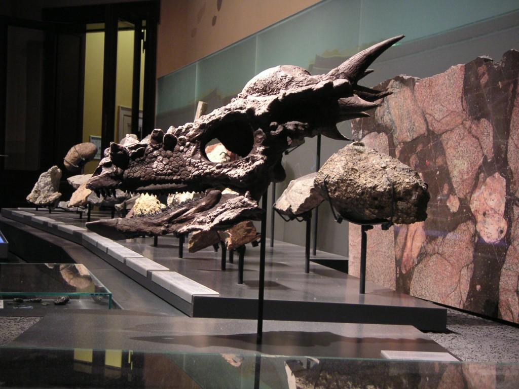 Stygimoloch spinifer Schädel (3)