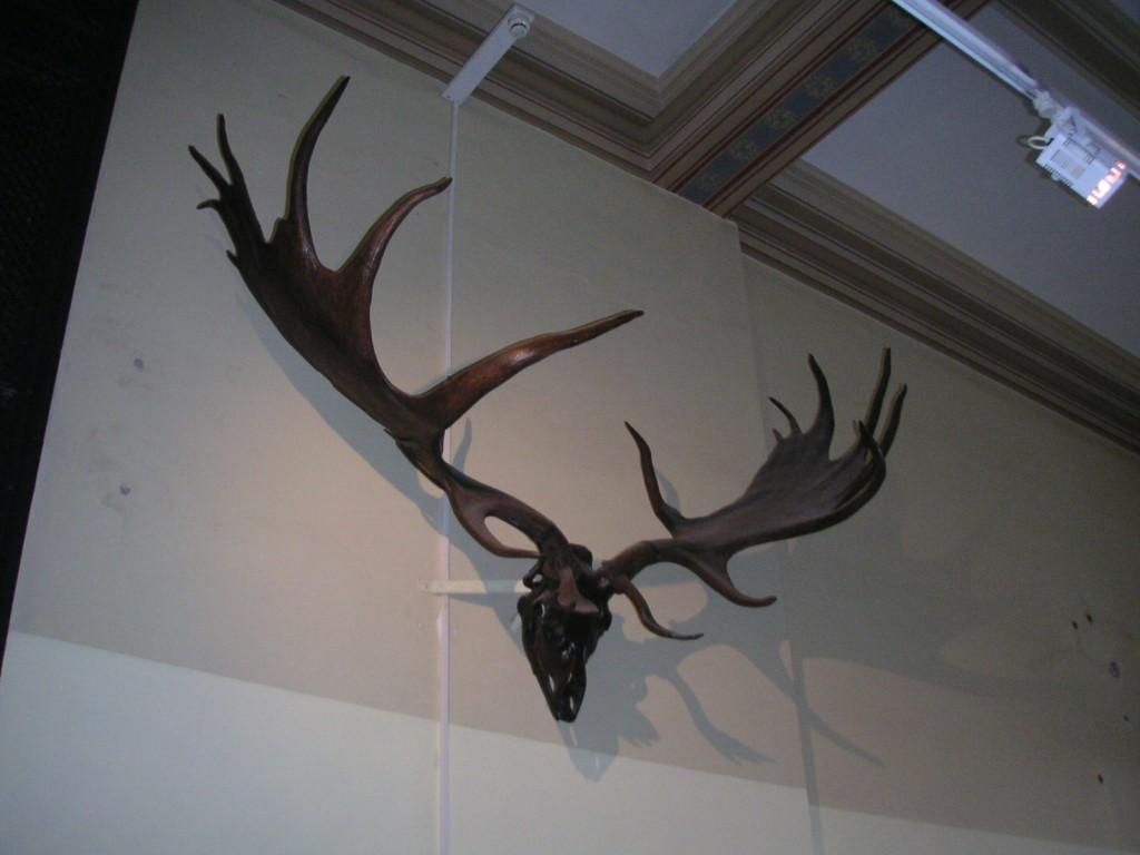 Megaloceros Berlin (2)