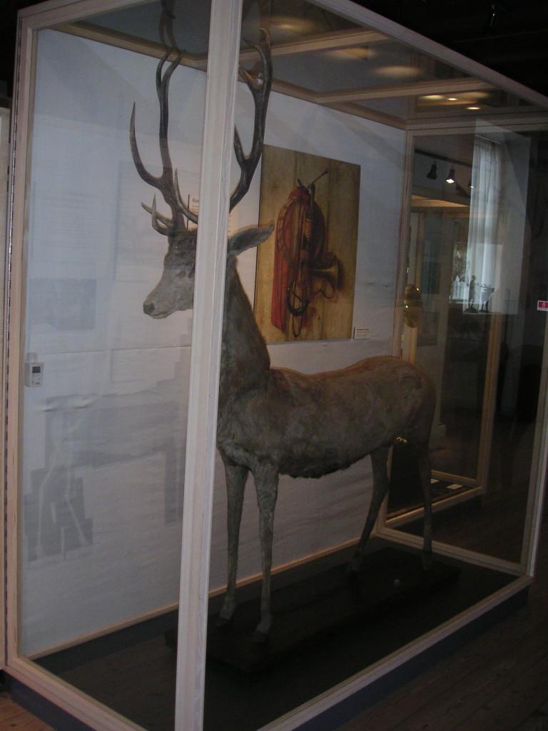 evtl. ältestes Hirschpräparat der Welt in Hörsholm, Dänemark (4)