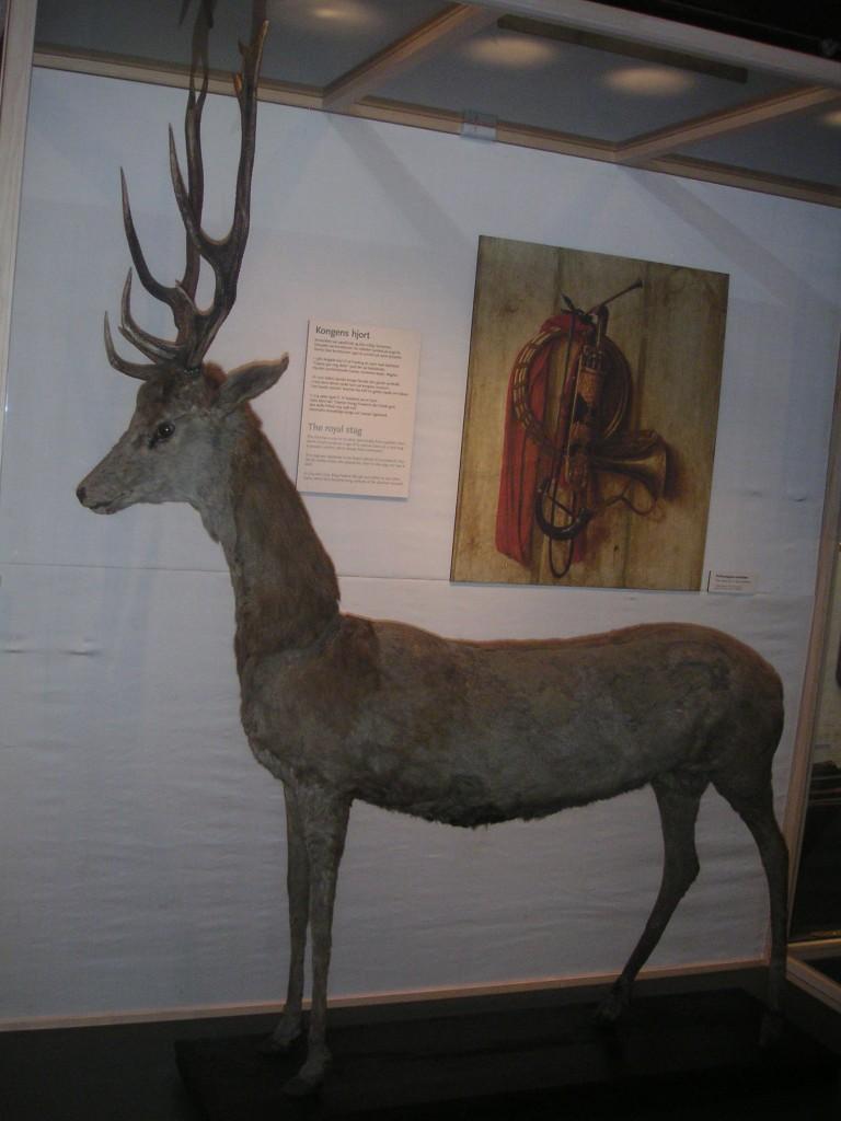evtl. ältestes Hirschpräparat der Welt in Hörsholm, Dänemark (5)