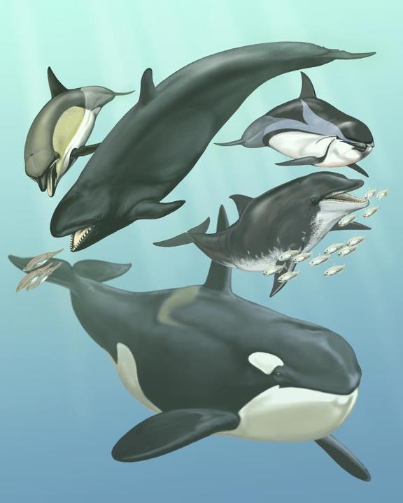 evolution delfin und fledermausgeh r sind berraschend. Black Bedroom Furniture Sets. Home Design Ideas