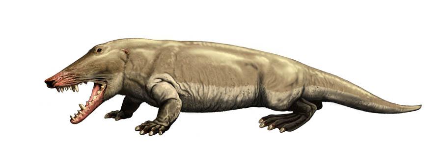 Ambulocetus von Carl Buell