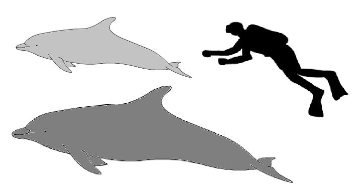Bottlenose_dolphin_size