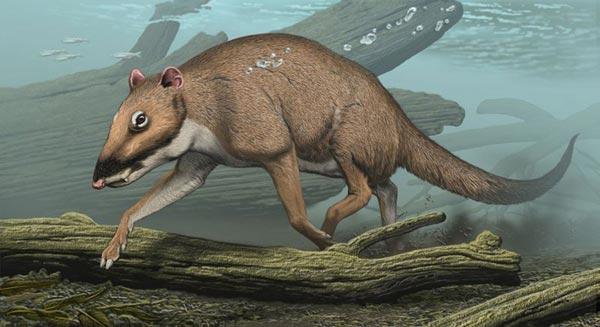 Indohyus major von Carl Buell