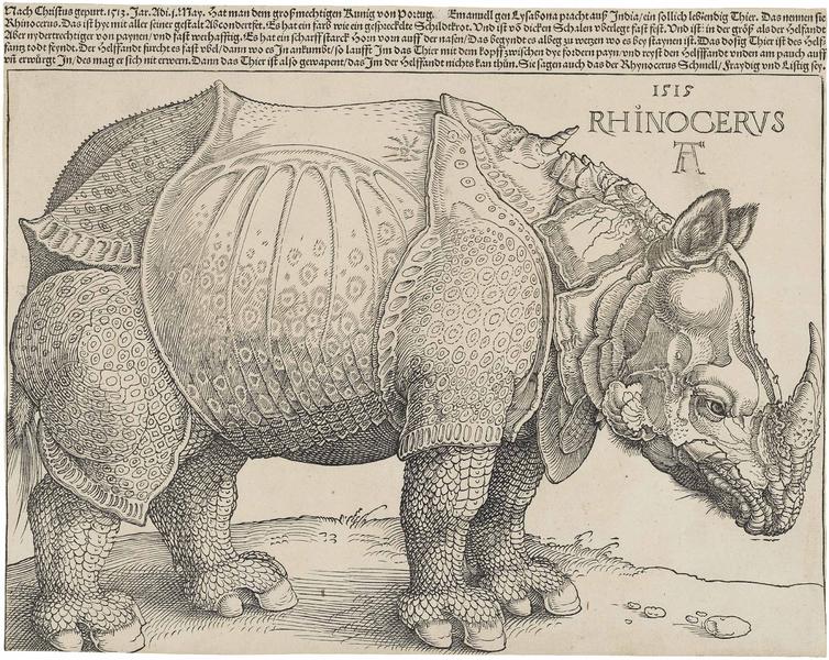 Rhinoceros by Albrecht Dürer, image from Wikipedia