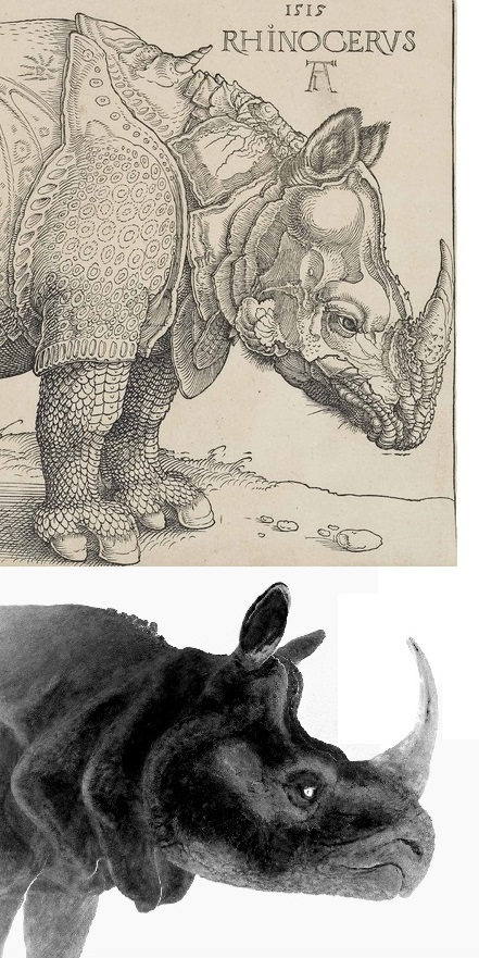 Dürernashorn Vergleich 2