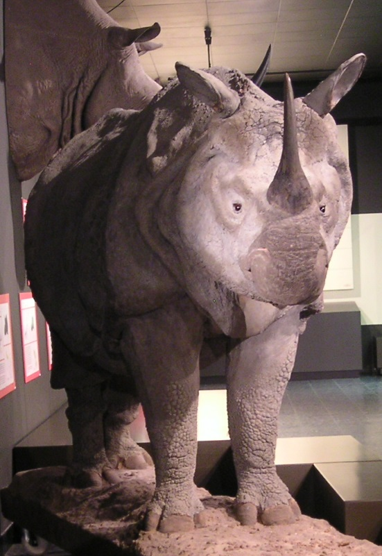 Indian rhino with shoulder horns, Zoological Collection Hamburg, Photo Markus Bühler