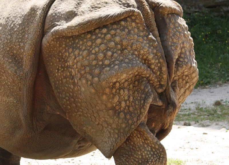 Skin of Indian Rhino from Philadelphia Zoo, modified image from Wikimedia Commons